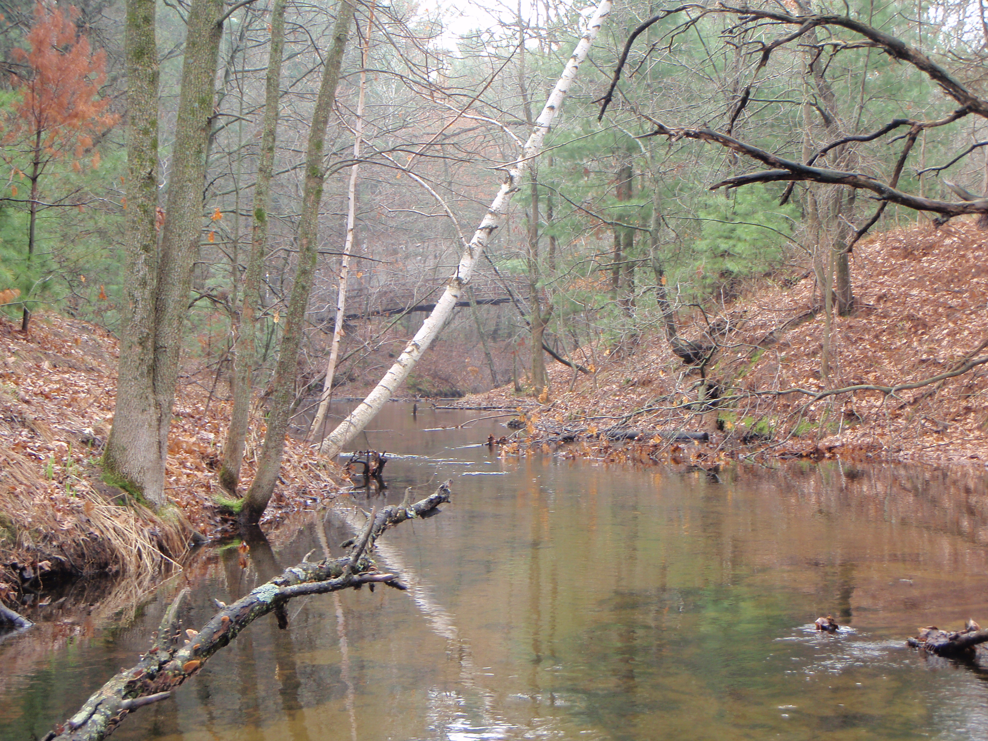 Creek between Island and Martin Lakes